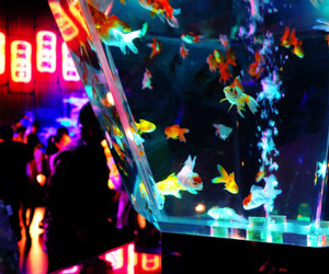 fish, neon, and aesthetic image