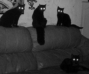cats, eyes, and shaima image