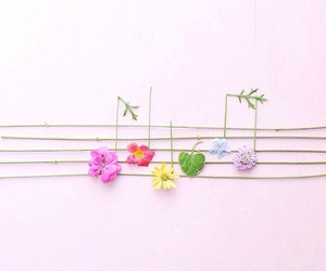 flowers, music, and beautiful image