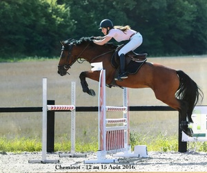 competition, horse, and jumping image