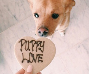 ariana grande, dog, and puppy image