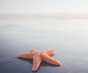 starfish and summer image
