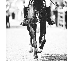 black, cheval, and csi image