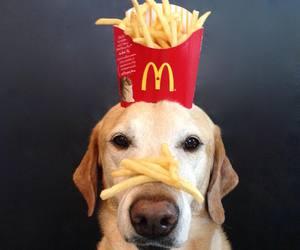 dog, fries, and McDonalds image