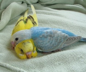 love, bird, and parrot image