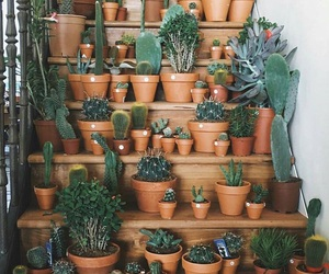 plants and cactus image