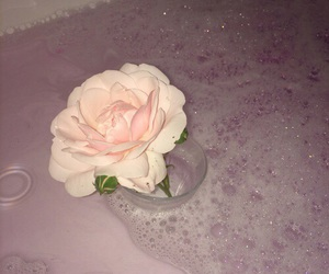 pink, rose, and flower image