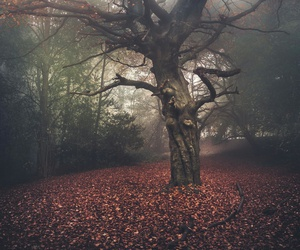 foggy, nature, and tree image