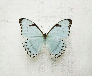 blue, butterfly, and indie image