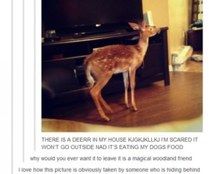 funny, deer, and tumblr image
