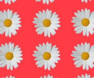 flowers, red, and wallpapers image