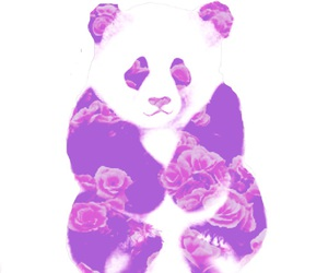 animal, roses, and art image