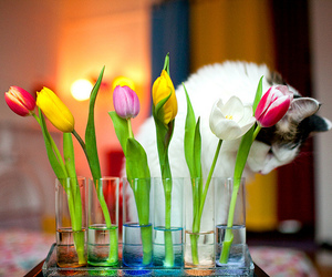 tulips, cat, and cute image