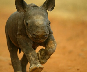 animal, baby, and rhino image