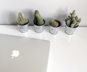 cactus, mac, and tumblr image