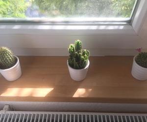 ikea, plant, and 🌵 image
