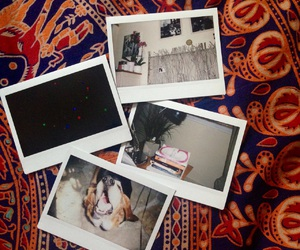 dog, fujifilm, and instax image