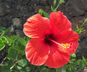 flower, green, and hawaii image