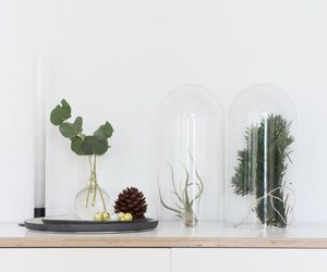 air plant, green, and interior design image