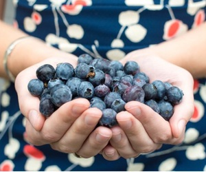blue, blueberries, and delicious image