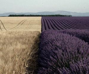 beige, purple, and lavender image