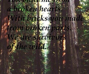 forest, revival tour, and music lyrics image
