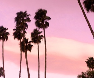 palms, tumblr, and clouds image