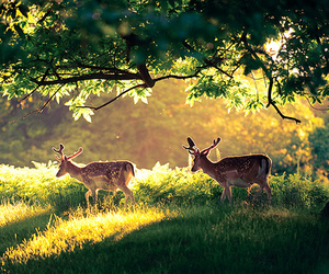 deer, nature, and animal image