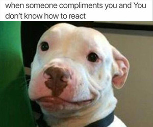 animals, dogs, and compliments image