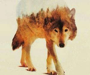 animal, art, and cool image