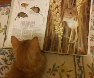 book, reading, and cat image