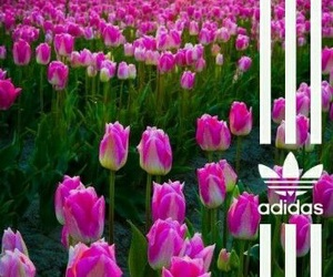 adidas, flowers, and Originals image