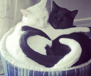 cat, love, and heart image