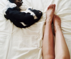 animal, animals, and chill image