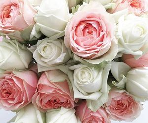 flowers, rosa, and white roses image