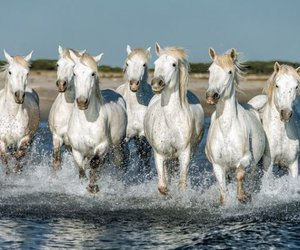 cheval, funny, and hapiness image