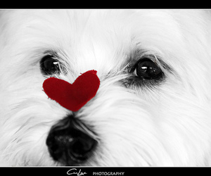 dog, explore, and heart image