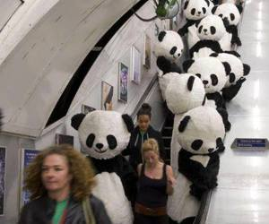 panda, black and white, and funny image