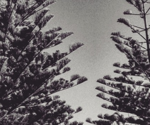 beach, trees, and myphotography+ image