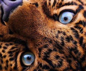 animal, beautiful, and eyes image