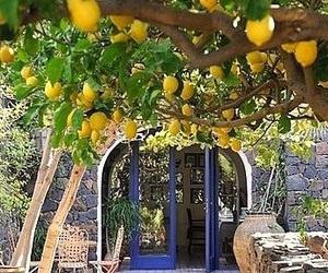 limoni image