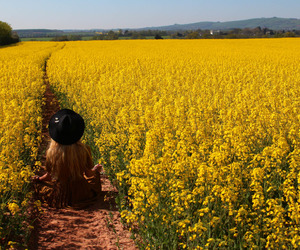 yellow, flowers, and nature image