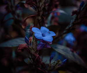 blue, garden, and plant image