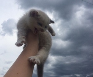 cat, cute, and sky image