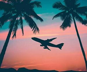 beach, palmtrees, and plane image