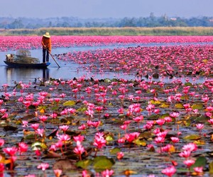pink, flowers, and lake image