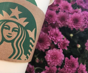 flowers, pink, and starbuck image