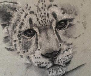 dibujo, tigre, and lápiz image
