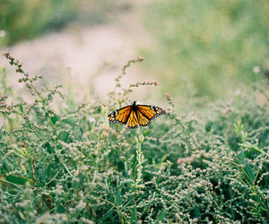 butterfly, monarch, and minolta x-700 image