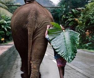 elephant, nature, and travel image